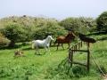 Equitazione 1