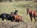 Equitazione 3